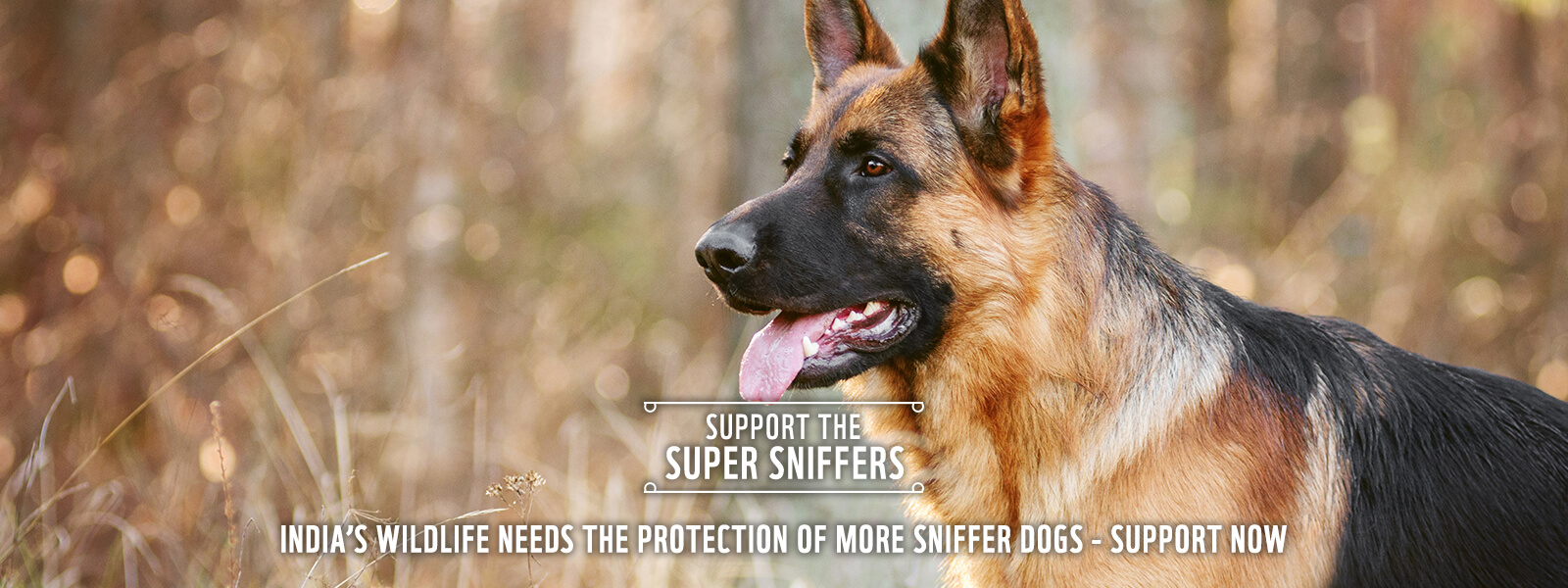 sniffer-banner