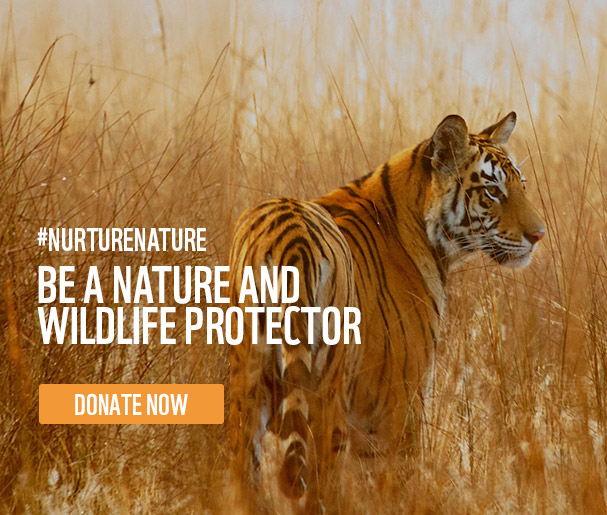 BE A NATURE AND WILDLIFE PROTECTOR. #NURTURENATURE
