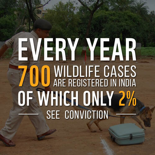 Wildlife Poaching Facts