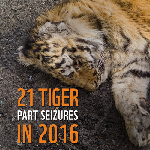 Tiger Poaching Facts