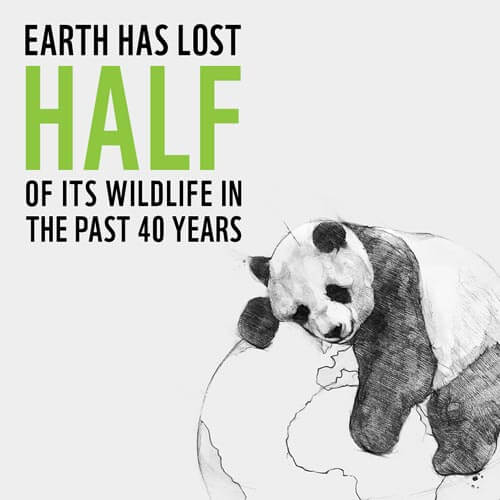 Wildlife Conservation Facts