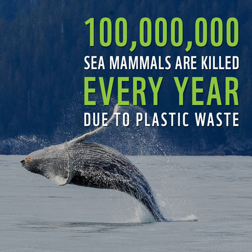 Marine Life Conservation Facts
