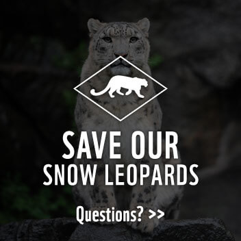 faq-leopards