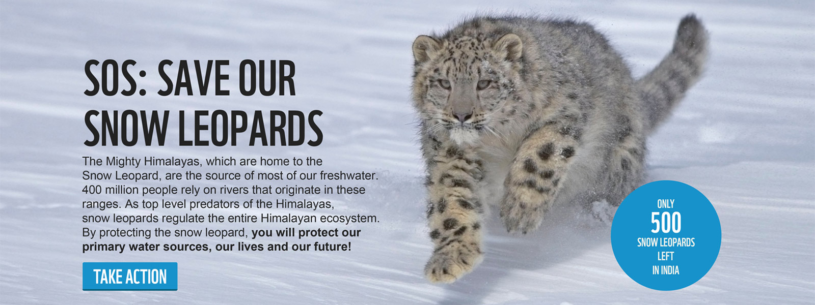 SAVE OUR SNOW LEOPARD - The Mighty Himalayas, which are home to the Snow Leopard, are the source of most of our freshwater. 400 million people rely on rivers that originate in these Ranges. As top level predators of the Himalayas, snow leopards regulate the entire Himalayan ecosystem. By protecting the snow leopard, you will protect our primary water sources, our lives and our future!