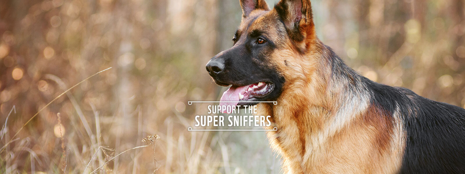Support Super Sniffer Dogs | Anti Poaching