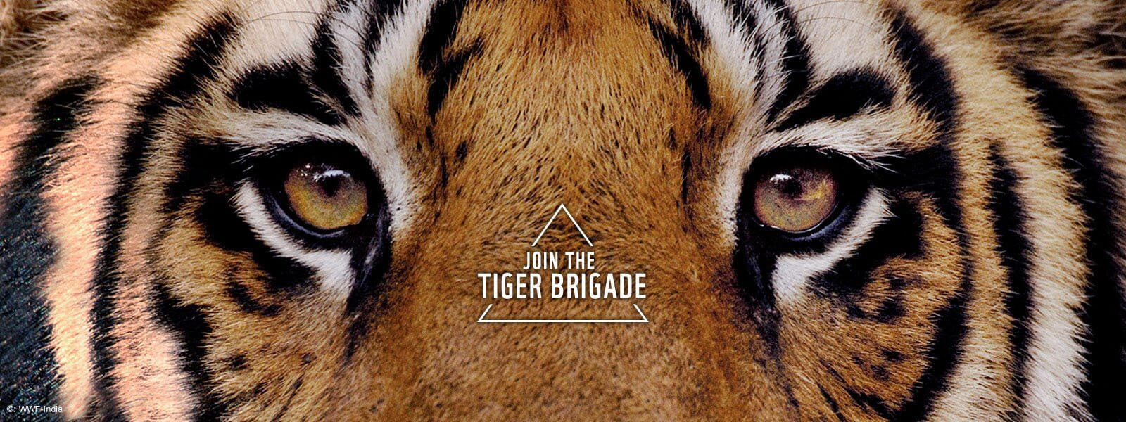 Save the Tiger | Tiger Project